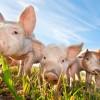 Farming - Livestock